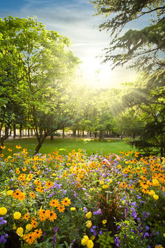 Parterre of flowers rounded by trees against sunset sunbeams