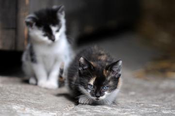 Katzenkinder im Stall