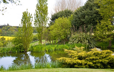 A garden pond in springtime