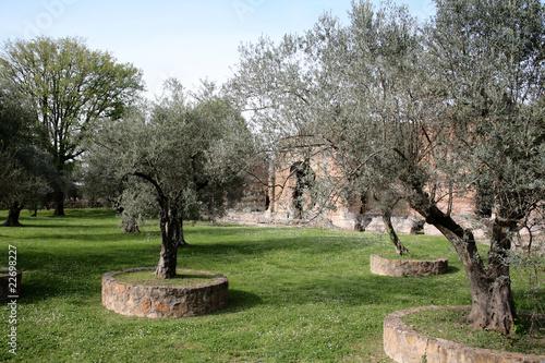 Alberi ulivi con aiuole immagini e fotografie royalty for Aiuola con ulivo