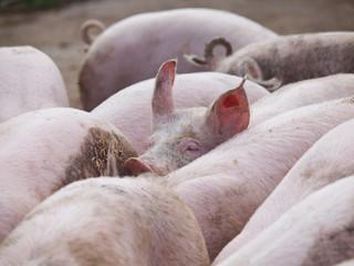 Guckt doch kein Schwein