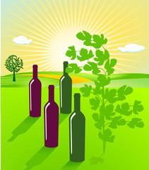 Wein Landschaft
