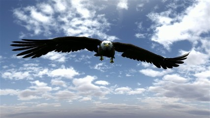Fototapete - american bald eagle hunting flying in a blue sky
