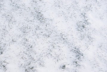 Green grass covered by fresh snow