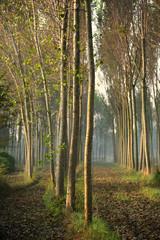 alberi 806