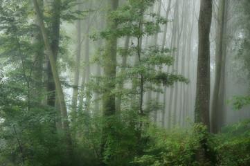 alberi 826