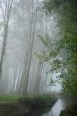 alberi 827
