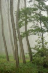 alberi 829