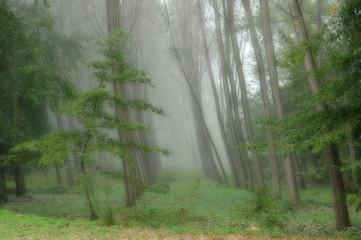 alberi 833