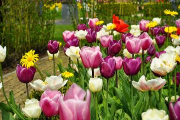 Aluminium Prints Tulip Tulpen