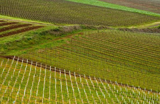 Oregon Wine Fields