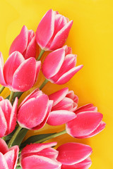 Bouquet of tulips and as a background for  post card