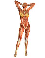 Wall Mural - Muskelaufbau Frau von Vorne