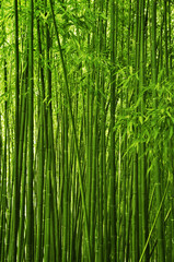 Printed kitchen splashbacks Bamboo Bamboo forest texture