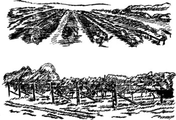 Vineyard landscape. Hand pencil sketch.
