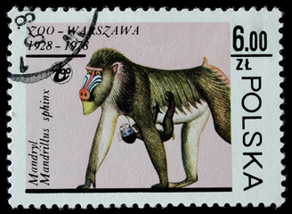 post stamp shows hamadryad with a baby