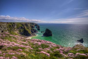 spring flowers on cliffs