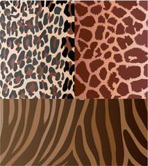 Set of backgrounds from animal textures. Vector illustration.