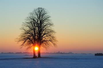 Baumgruppe / Sonnenuntergang
