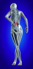 Lower spine