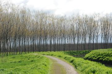alberi 952