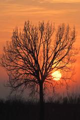 alberi 929