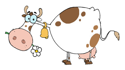 White And Brown Cow Eating A Daisy