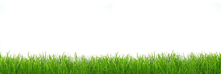 Panorama of grass, isolated