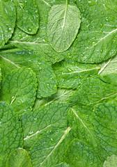 Spearmint herb background