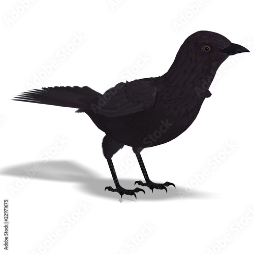 American Crow  3D rendering with clipping path and shadow over w