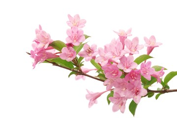 Pink flowers with fresh green leaves