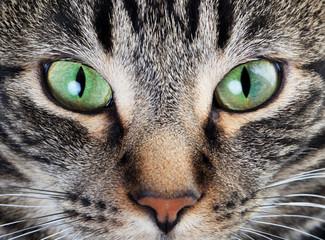 Calm Cat Eye Macro