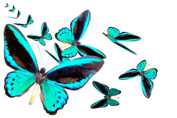 blue brilliant butterfly