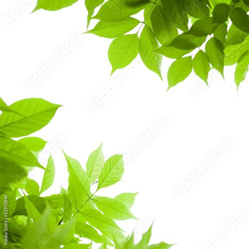 Fond vert feuilles vertes sur arri re plan blanc nature for Plante 3d gratuit