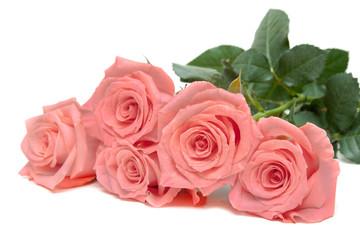 Five roses lies