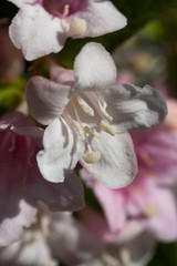 Fleur blanche en gros plan