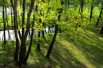 alberi 38
