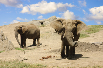 Elephants on the way to a water hole