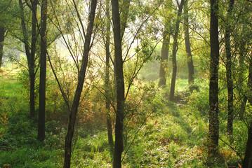 alberi 440