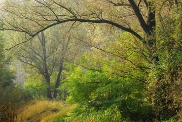 alberi 441