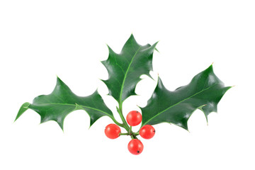 Holly (Ilex aquifolium) isolated on white
