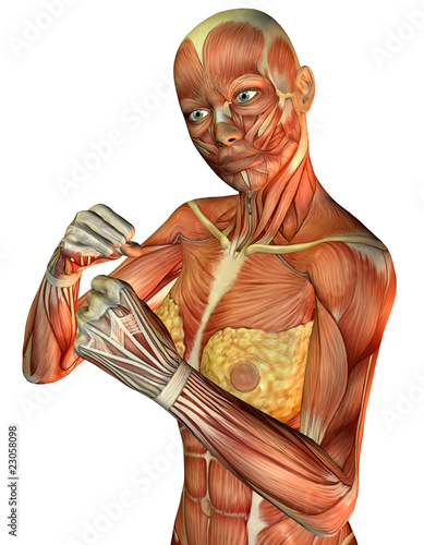 Muskelaufbau sportlicher weiblicher Oberkörper\
