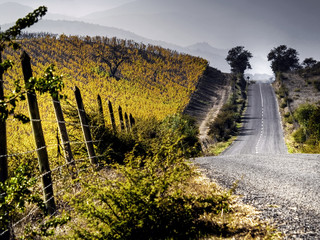 paisaje de carretera con viñedos