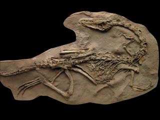 20100528_恐竜の化石