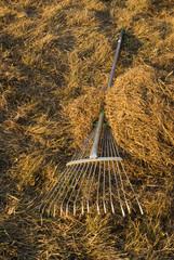 Rake on the hay