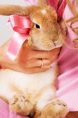 A little rabbit with a pink bow