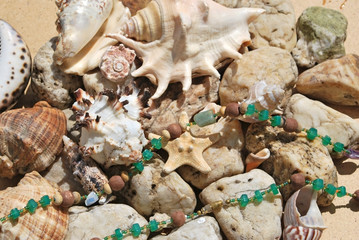 few seashells