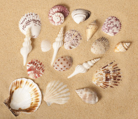 Seashell Collection Design