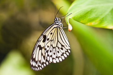 Paper kite butterfly hanging on leaf