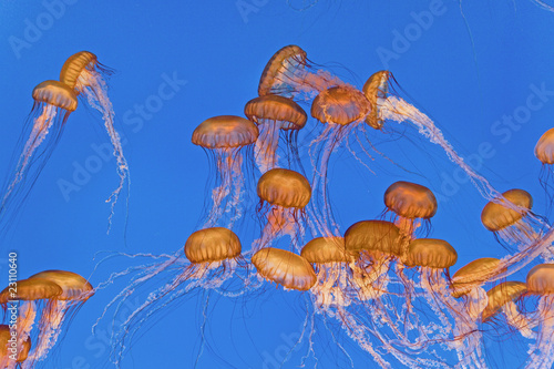 Wall mural beautiful Jelly fishes in the aquarium